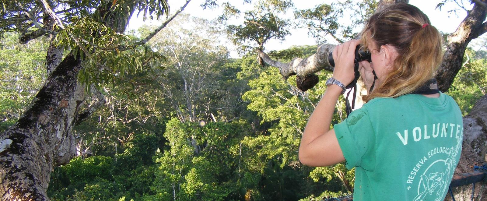 Tijdens een groepsreis natuurbescherming regenwoud zoekt een vrijwilliger naar vogels in Peru.